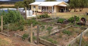 Vegetable Garden at Walpole Work Camp