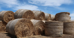 Image of bales of hay at Pardelup Prison Farm
