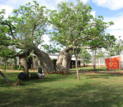 Image of a Boab tree outside the women's Unit 2 at West Kimberley Regional Prison