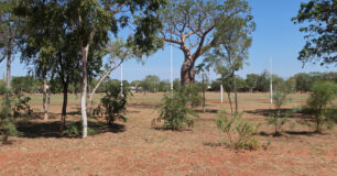 Image of trees around the Oval at West Kimberley Regional Prison