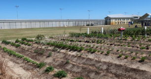 Image of the vegetable patch in the forefront and Oval in the background at Melaleuca Women's Prison